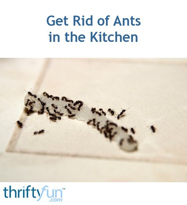 how to get rid of ants in my kitchen sink