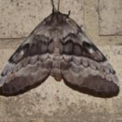 Moth on Brick