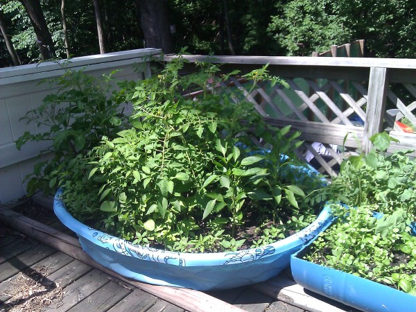Patio garden using child s pool and barrel