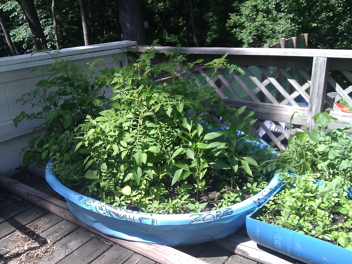 uses for wading pools   thriftyfun