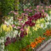 Bed of annuals