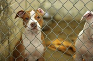 A dog awaiting adoption.