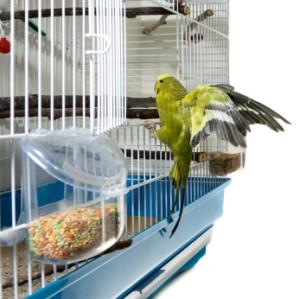 A bird landing on a cage door.