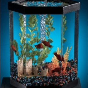 Small fish tank with fish and plants inside.