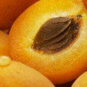 An apricot cut in half.