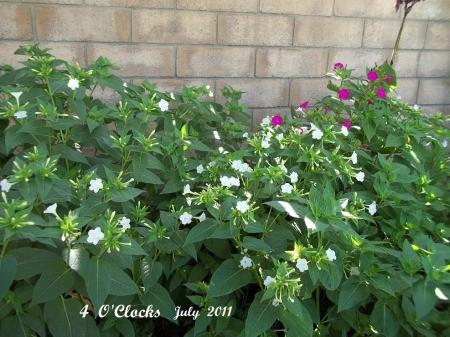 Flowers in Secret Garden