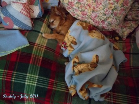 Buddy Napping on Quilt