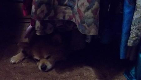 Buddy Napping