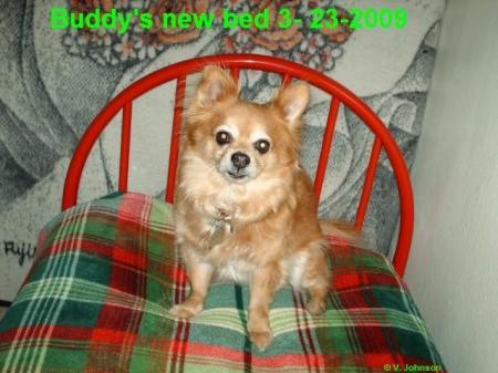 Buddy Sitting on Chair