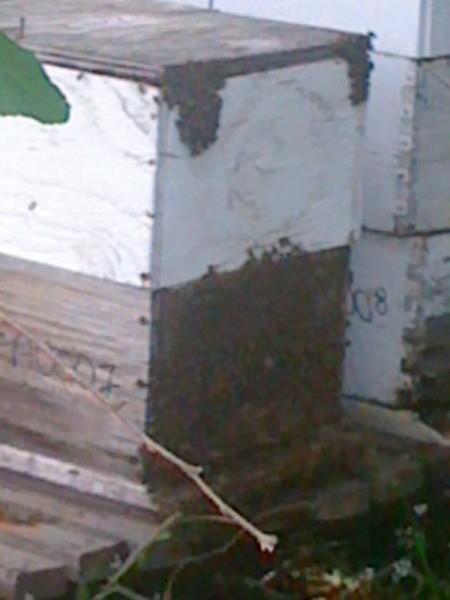 Wooden bee hive