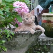 Mustard the Cat in Cement Planter