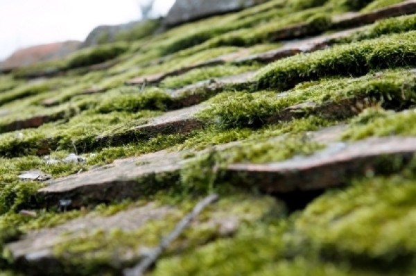Preventing And Removing Moss From Your Roof Thriftyfun