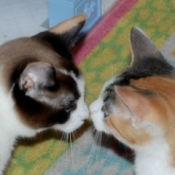 Cats Little Baby and Nadia Touching Noses