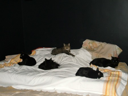 Multiple cats lying on a bed.