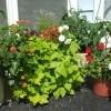 Moveable Garden by Front Door