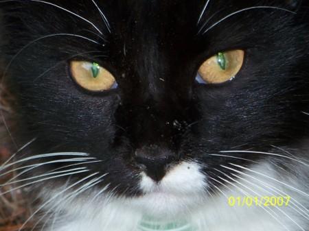 Closeup of Socks the Cat