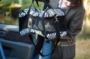 Woman Putting Cat in Cat Carrier in Car