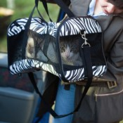 Woman Putting Cat in Cat Carrier in Car