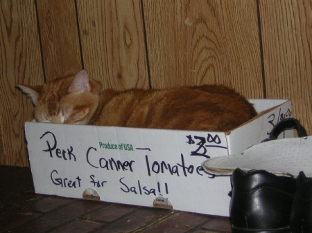 Fry the Cat Sleeping in a Box