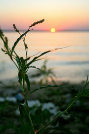 Sunset at Lake Texoma with Grass in Foreground