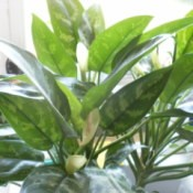 Houseplant with stripped leaves