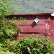 Red Peonies and Birdhouse Against Side of Red Shed