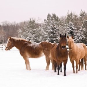 Horses standing in the snow.