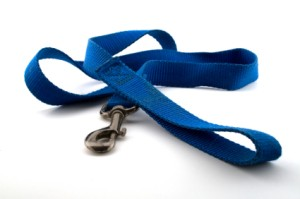 A blue nylon dog leash