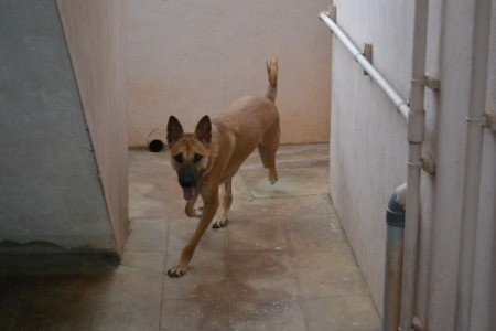 Rambo the Dog Running Around Corner on Tile Floor