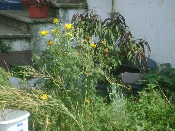 Wildflowers in Garden