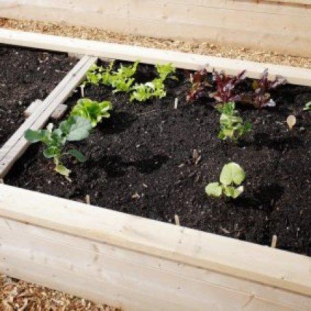 wood framed garden bed