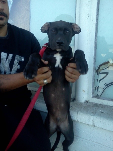 Man holding a puppy up on his hind legs.