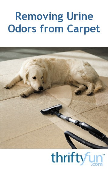 Cleaning Urine Odors From Carpet