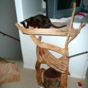 Photo of a homemade rustic cat tree made with wood.