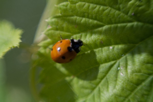 Identifying Beneficial Garden Insects   ThriftyFun