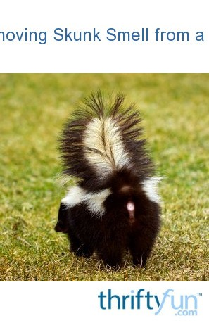 Removing Skunk Smell from a Dog   ThriftyFun