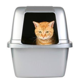 Orange Tabby Sitting In Covered Litterbox Cat Litter