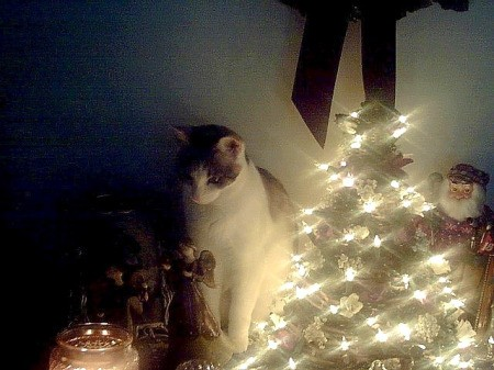 Sammy Girl Behind Christmas Tree