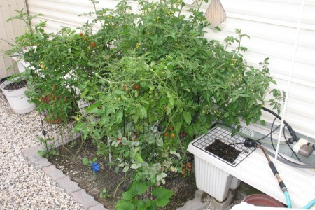 Small area vegetable garden surrounded by gravel.
