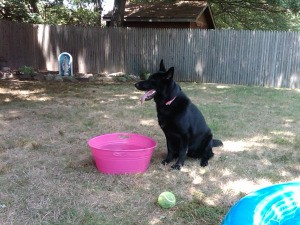 Black dog in yard near a pink water tub.