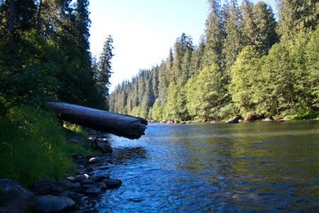 Log Hanging Out Over River at Campground