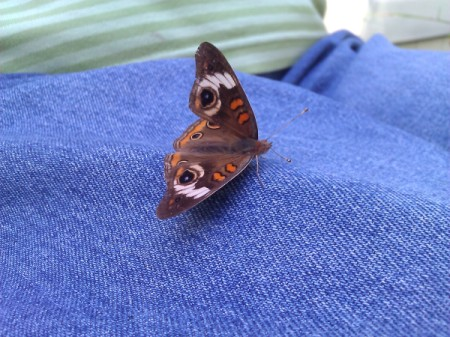 Colorful Moth on Jeans