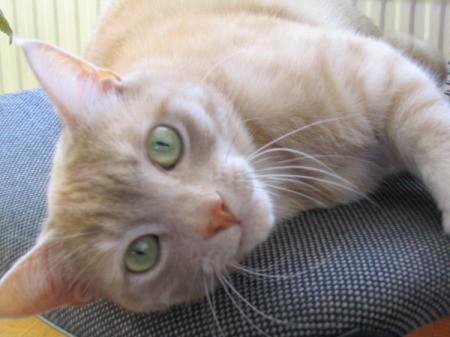 Close up of Floris the Cat