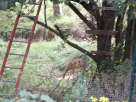 Deer Below Tree Stand