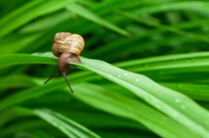 A snail on a flower stalk.