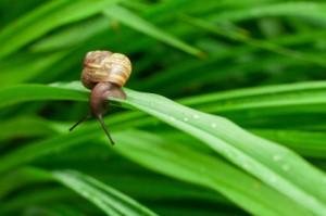 A snail on a flower stalk.