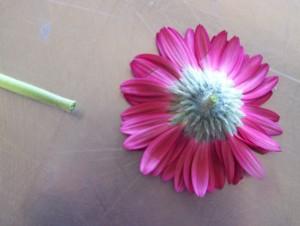 Cut stem off Flower head