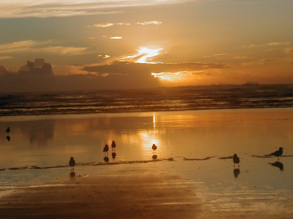 Ocean Shores Sunset with Birds in Foreground