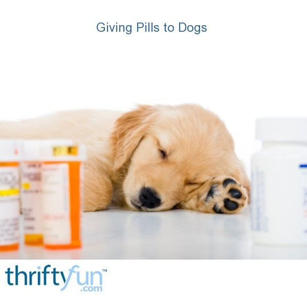 Giving Dogs Pills Without Food