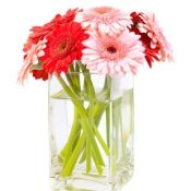 Pink and red daisies in a clear glass vase.